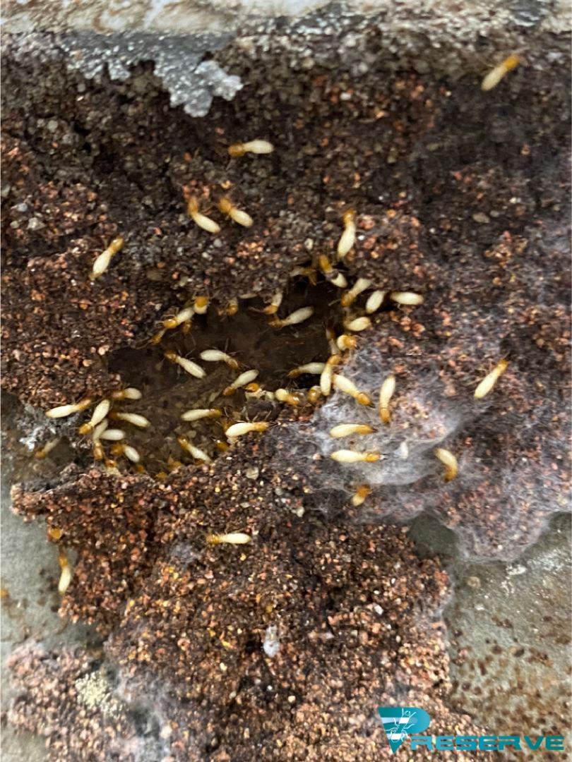 Preserve Pest Control-16075920748.jpg